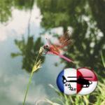 Число летающих насекомых в Европе сократилось на 75%
